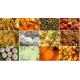 Mangalore Vegetarian Menu