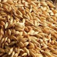 Jave Godhi (Long Wheat), 1 kg