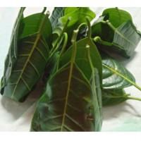 Kotte - Jackfruit Leaf Moulds (Pack of 5 )