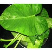 Kesuvina Soppu  -Colocassia Leaves  - Pack of 5