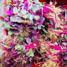 Harive Soppu Red- ಕೆಂಪು ಹರಿವೆ ಸೊಪ್ಪು 500gm