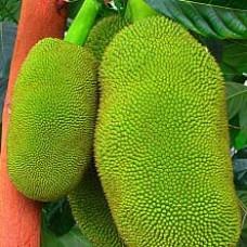 Raw Jack fruit / ಕಚ್ಚಾ ಹಲಸು 1 Kg