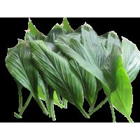 Turmeric Leaves I Haladi Pan - (pack of 20)