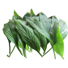 Turmeric Leaves (pack of 20)